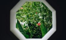 Window into garden