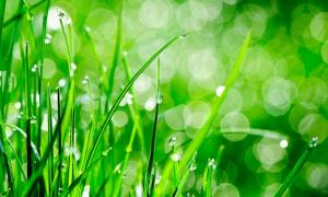 Photograph of rain drops on grass