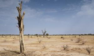 Photo of desert by TREEAID at flickr.com